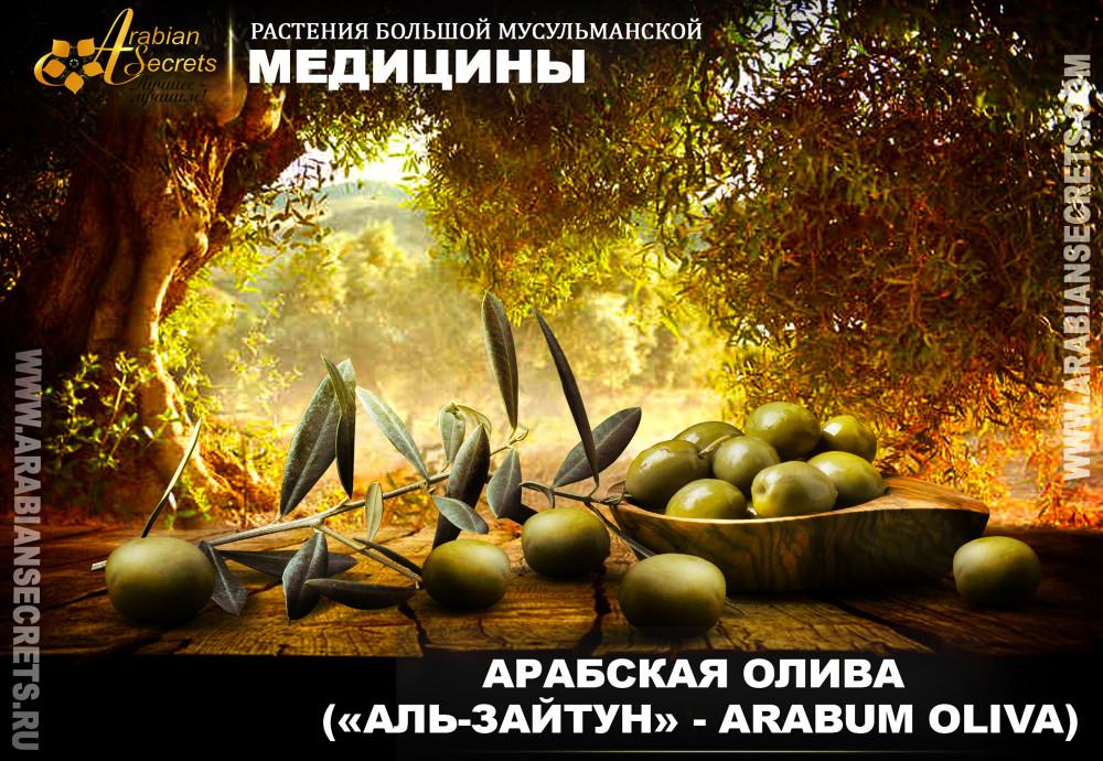 АРАБСКАЯ ОЛИВА («АЛЬ-ЗАЙТУН» - ARABUM OLIVA)