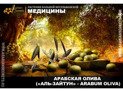 <АРАБСКАЯ ОЛИВА («АЛЬ-ЗАЙТУН» - ARABUM OLIVA)